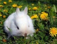 Прогулки кролика дома и на природе