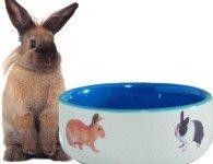 Сколько комбикорма (корма) давать декоративным кроликам