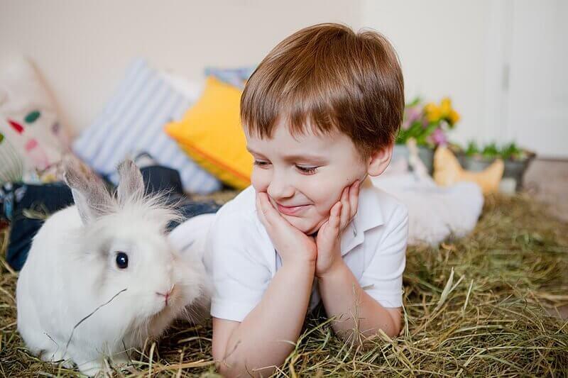 Декоративный кролик для ребенка. Вы решили купить ребенку декоративного кролика?