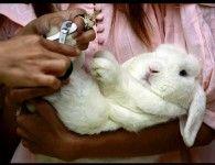 Как подстричь когти кролику