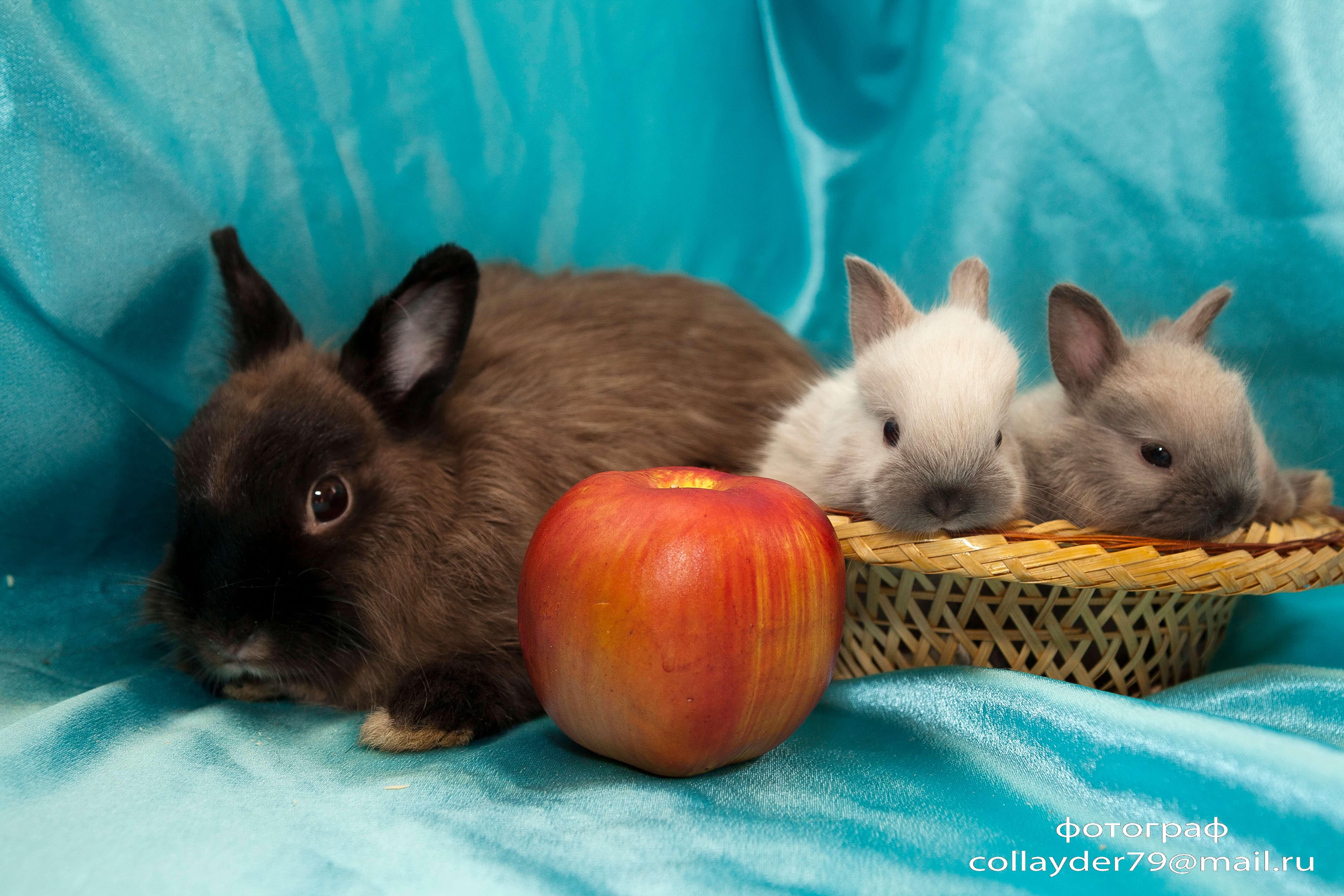 Как правильно выбрать декоративного кролика