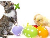 До какого возраста растут декоративные кролики