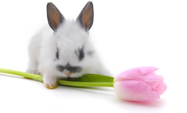 Стоит ли заводить декоративного кролика