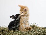 Декоративные кролики и другие животные