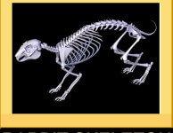 Анатомия и физиология кроликов