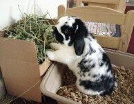 О чем следует подумать, прежде чем покупать кролика