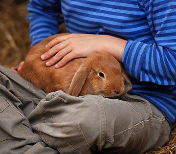 Оказание первой помощи кролику