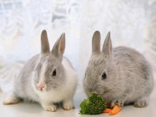 Пищеварительные процессы у крольчат