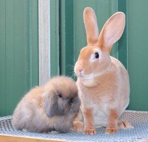 Интересные факты про кроликов