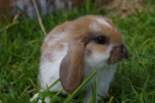 Насморк, слезящиеся глаза, чихание у кроликов