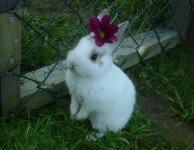 Понос у декоративного кролика что делать