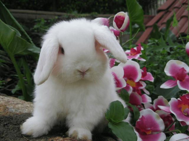 Аптечка для декоративных кроликов