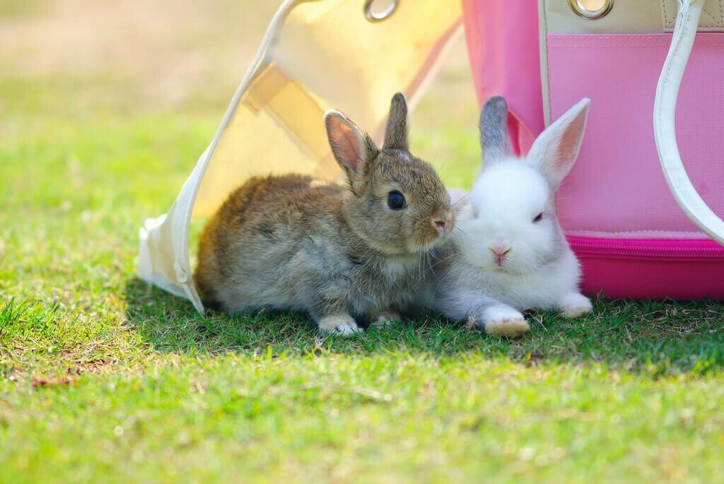 Если у кролика выпадает шерсть