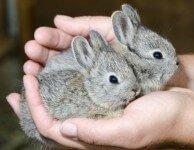 Самые маленькие кролики в мире