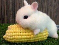 Аллергия на декоративного кролика бывает?