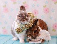 Как измерить температуру кролику
