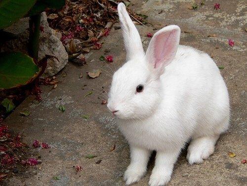 Как быстро растут кролики, таблица роста кроликов