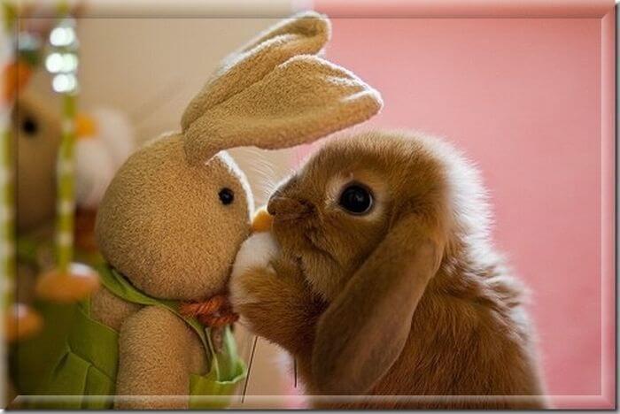 Приют для кроликов. Куда отдать кролика