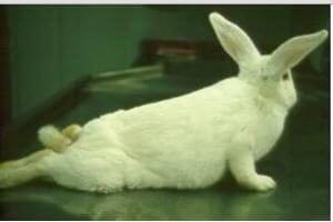 Листериоз у кроликов симптомы лечение