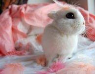 Можно ли давать декоративным кроликам картошку