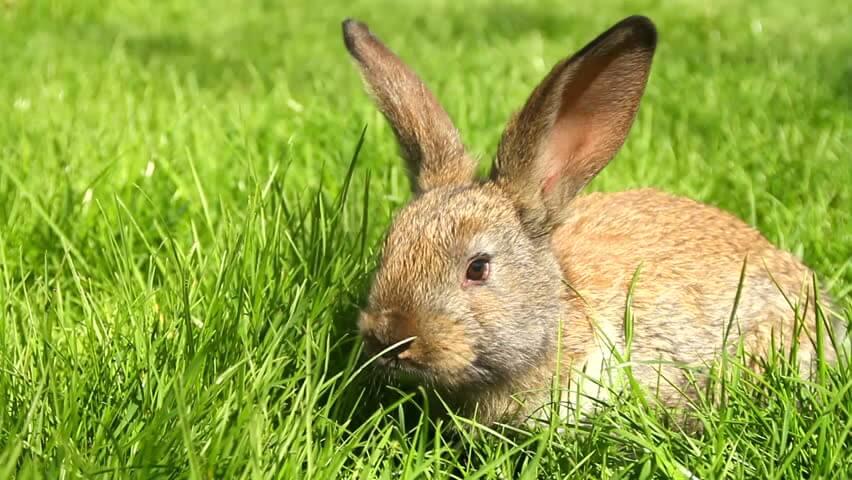 Полезные травы для кроликов