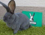 ЛПХ Успешный кролик