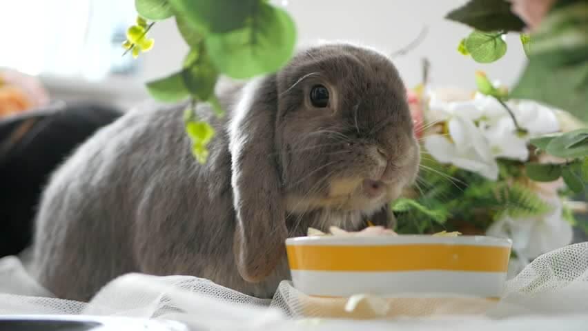 Можно ли давать декоративному кролику лук