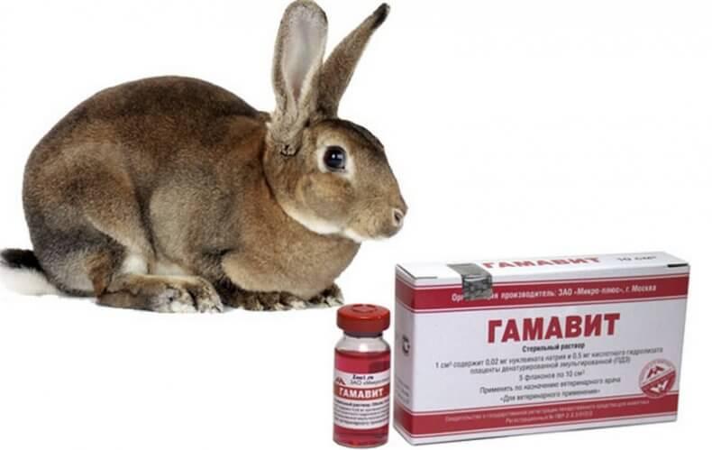 Гамавит для кроликов инструкция по применению