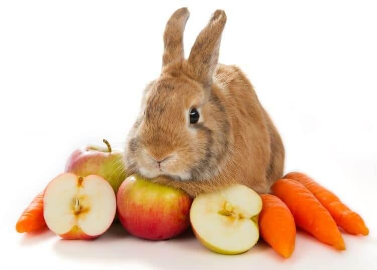 Какие фрукты и овощи можно давать декоративным кроликам