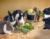 Кролики едят мясо или только растения ?
