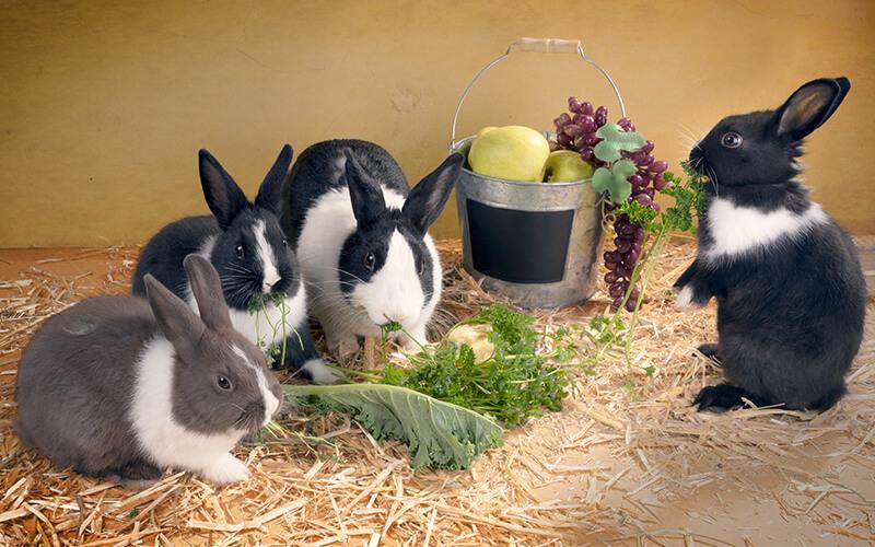 Кролики едят мясо или только растения